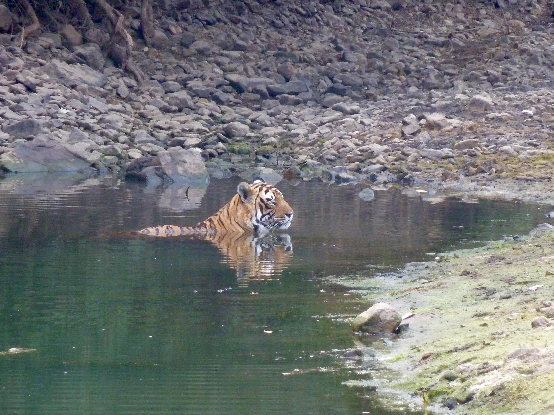 tiger-photo.jpg